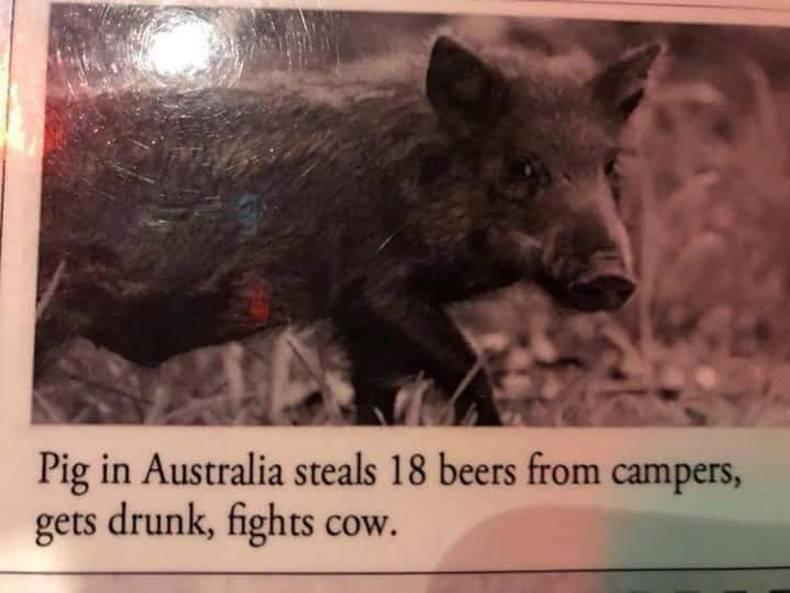 Gewoon een verzameling hilarische foto's #994